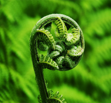 The Koru - experimenting with shapes from nature